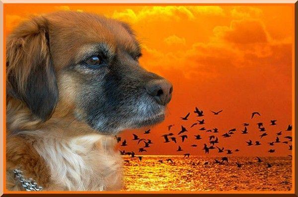 chiens sur fonds levercoucher de soleil