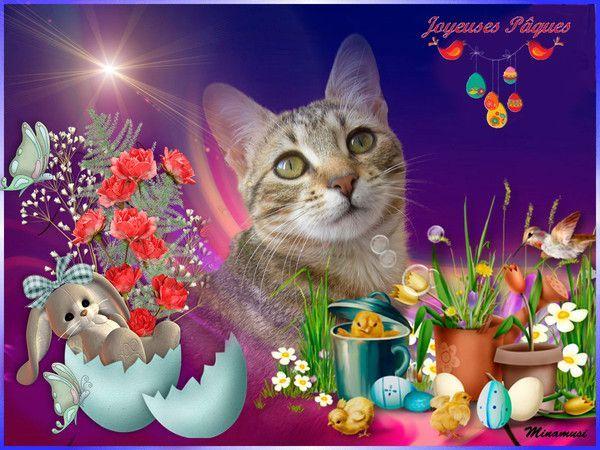 """Résultat de recherche d'images pour """"bonnes pâques avec chats"""""""
