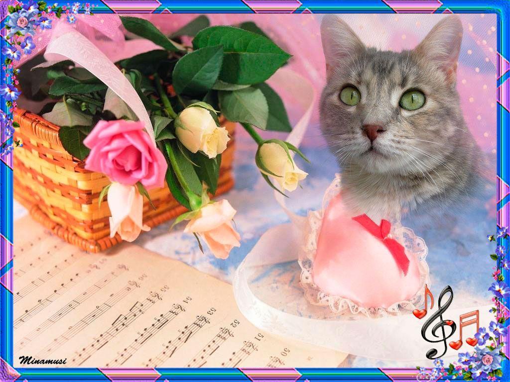 sonnette chat sites Retrouvez tous les titres de l'oranger sur ou visitez le site http://www sonnette de porte chat qui miaule, miaule.