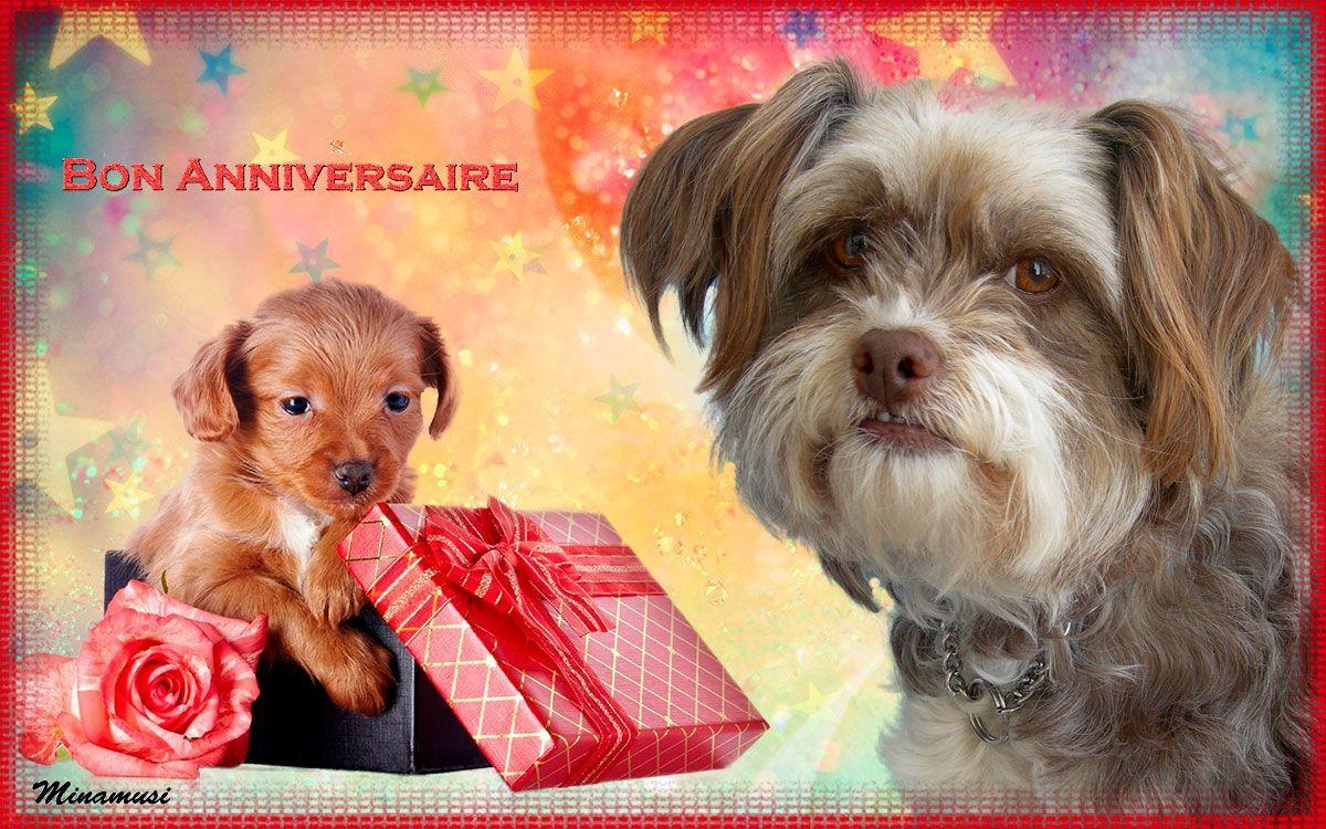 Chiens sur fonds anniversaire - Image de chien a imprimer ...