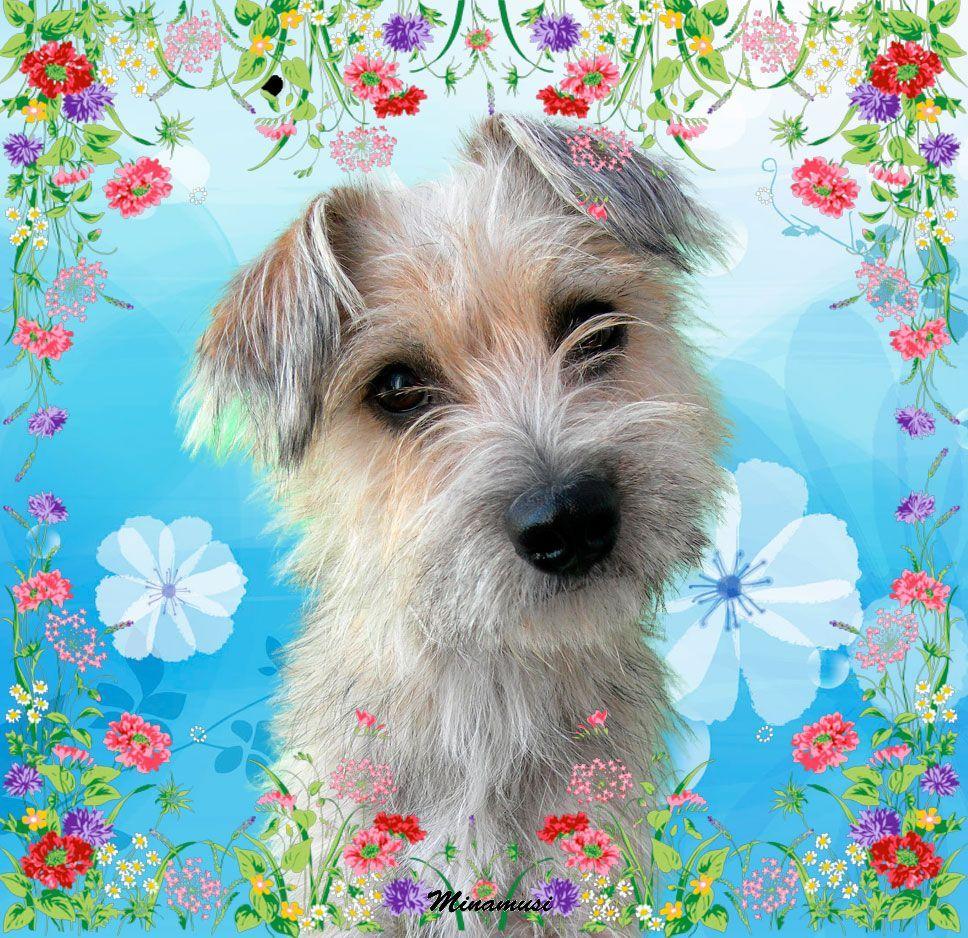 chien de printemps Pour pouvoir inscrire un chien dans une épreuve de field trial inscrite au calendrier cunca, les conditions suivantes sont requises .